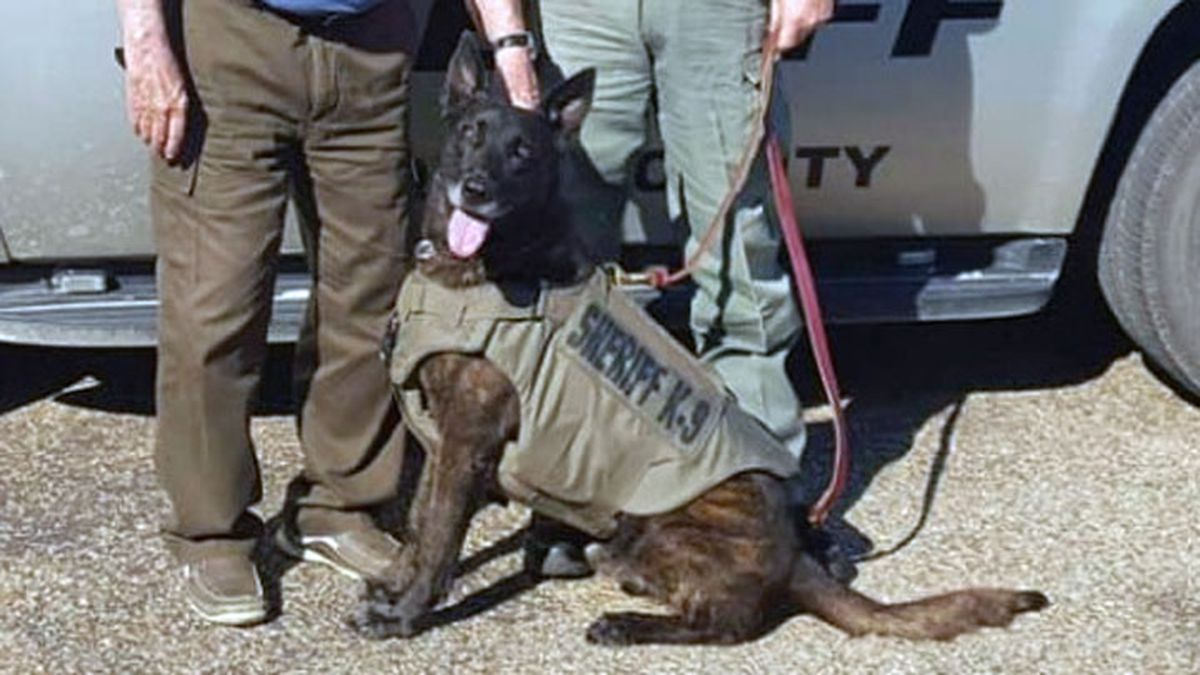 Buck was a military K-9 before he was acquired by the Bosque County Sheriff's Office in 2014 to...