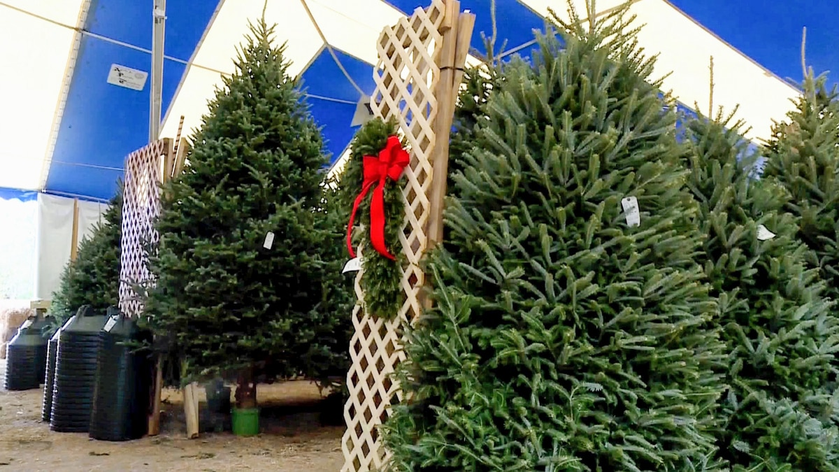 One of the largest Christmas tree farms in Central Texas announced Sunday that they are closing...