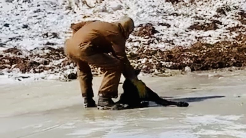 Hill County cattle rancher David Ballew rescued a calf stranded on ice Tuesday following days...