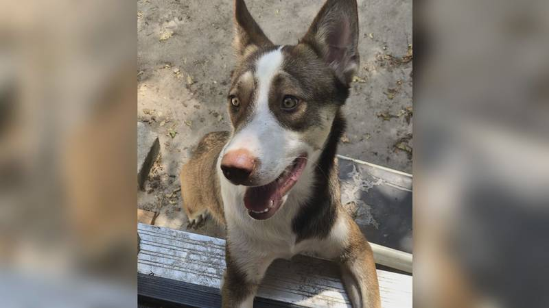Dozens of dogs reported missing after 4th of July