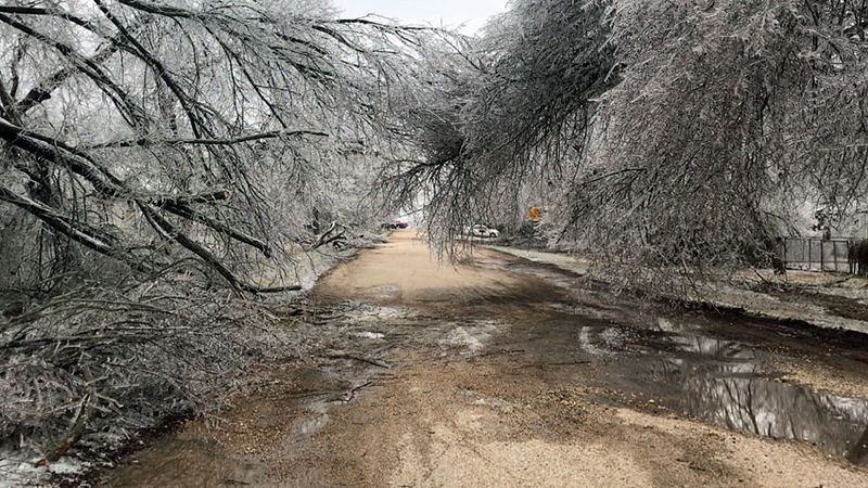 The weight of the ice downed trees and snapped tree limbs.
