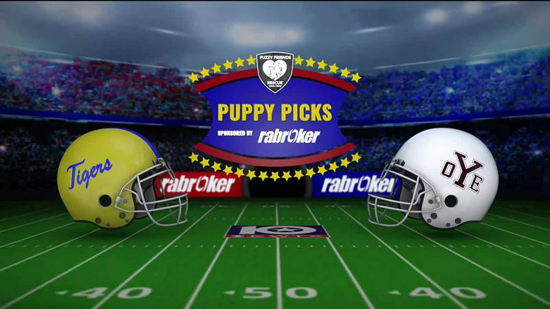 2021 Puppy Picks: Raven, Week 6
