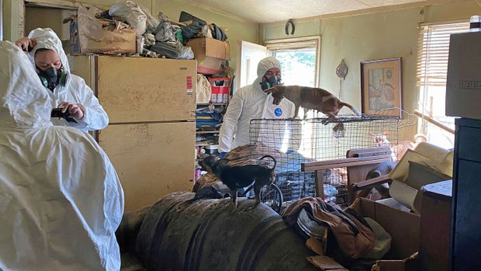 The SPCA of Texas removed them from a trailer on a property in Van Zandt County, Texas.
