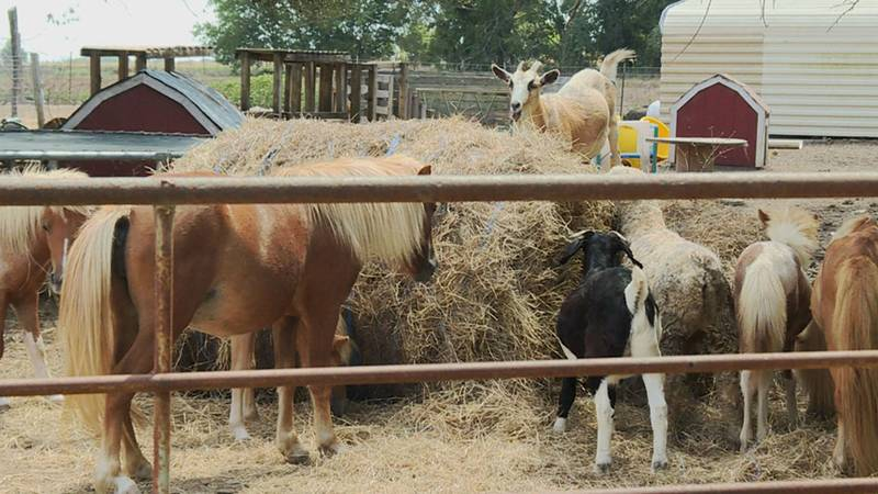 Tiny Hooves Rescue and Petting Zoo hopes to deliver supplies to hard-hit areas of Louisiana.