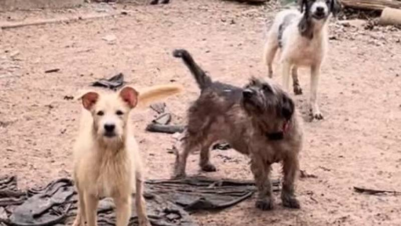 Central Texas animal rescue organizations came together Thursday night to find homes and proper...