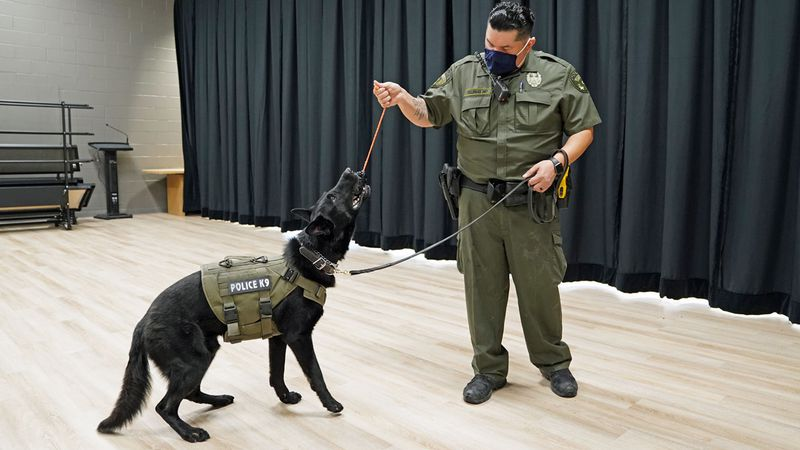 Killeen ISD police Officer Quirino Villegas and his K9 partner Sauron, kicked off the...