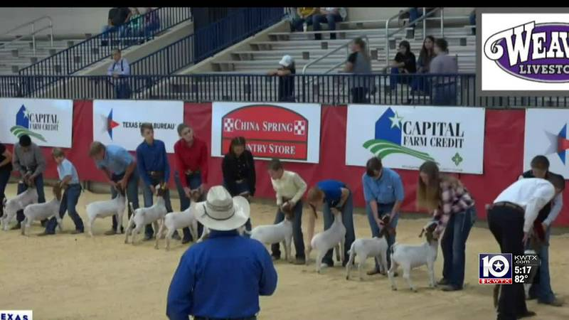 Goat showing at CTX fair