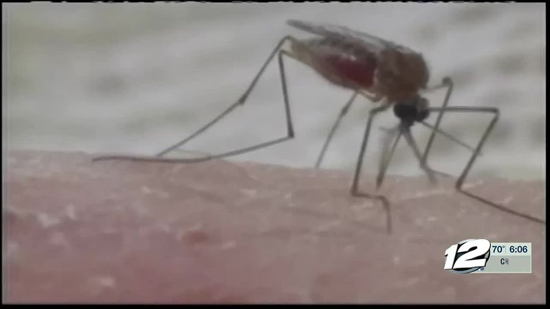 Experts say recent rain is recipe for mosquitoes