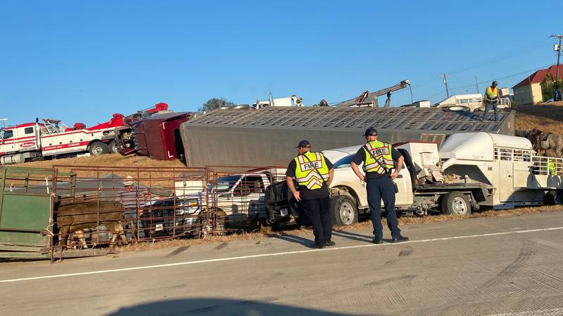 An overturned cattle truck caused delays on I-35 Thursday morning.