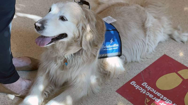 Dogs are once again delivering their special healing magic to hospital patients.