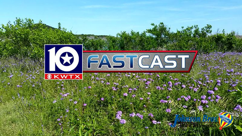 fastcast wildflowers flowers spring summer clear sky sunny