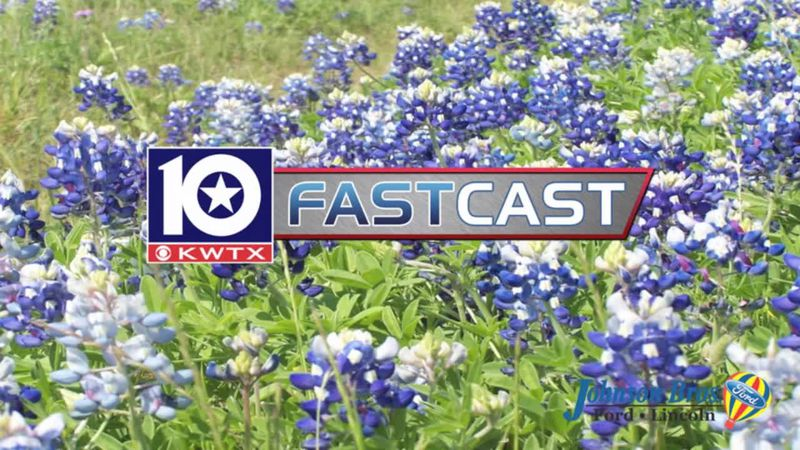 fastcast bluebonnets summer flowers spring field