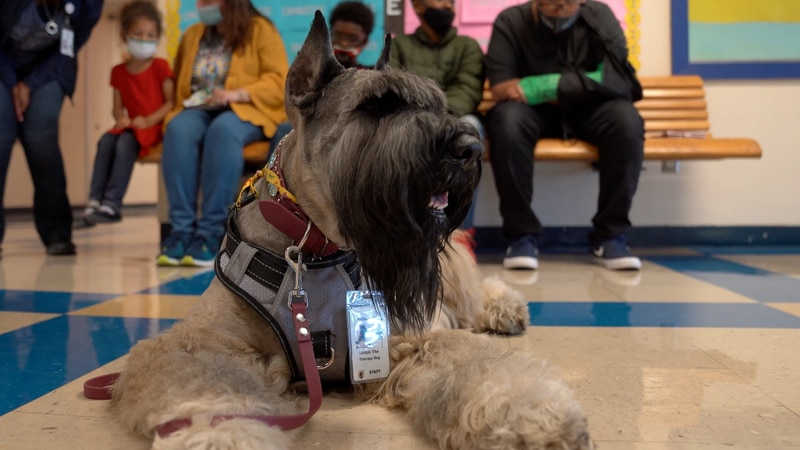 Therapy dog brings a sense of 'normalcy' back to one area school