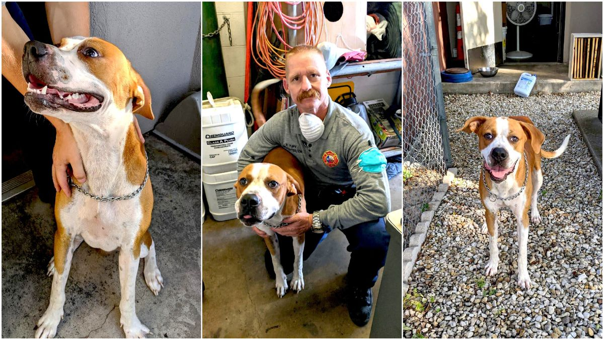 Waco firefighter Richard Tupy was so charmed with Moses, he decided to make the dog a member of...