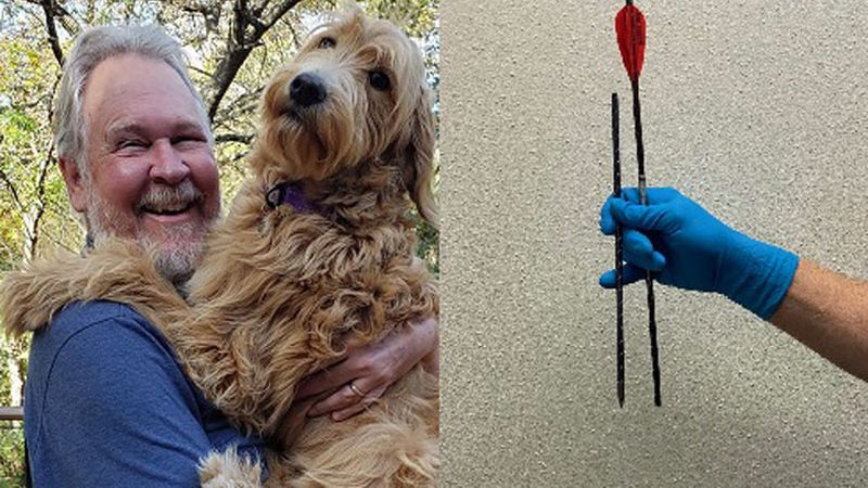 The 8-month-old golden doodle named Bailey, shown with her owner, Dale Dickenson, died after...